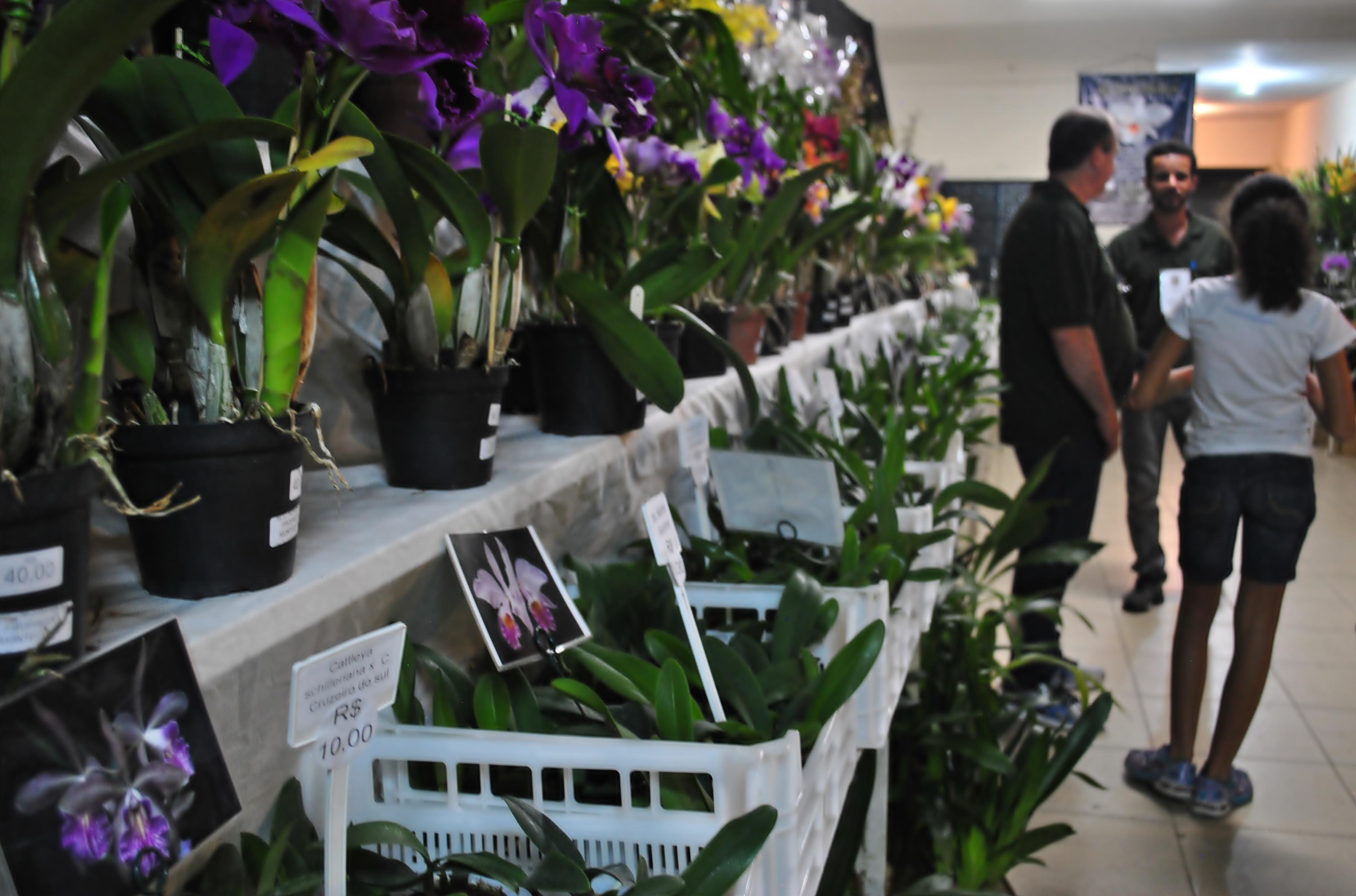 VI Exposição Nacional de Orquídeas traz diversidade de espécies a Tiradentes