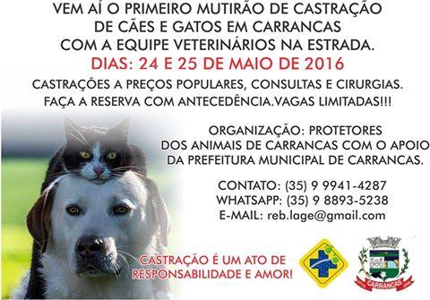 A iniciativa oferece castração a preços populares. FOTO: Divulgação