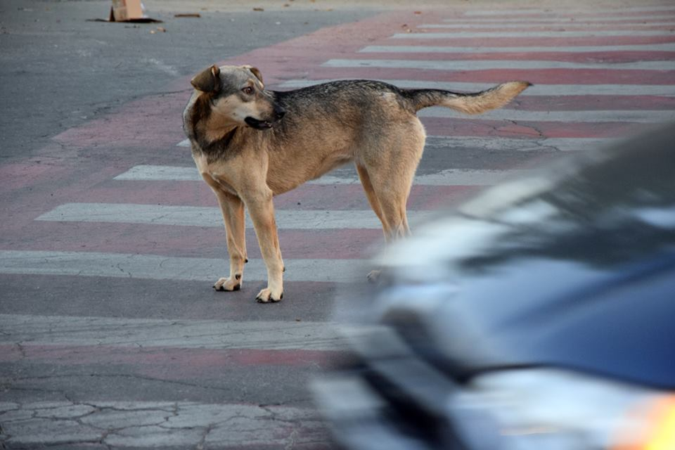 Em SJDR, projeto busca o controle populacional dos cães de rua. FOTO/VAN: Juliana Galhardo