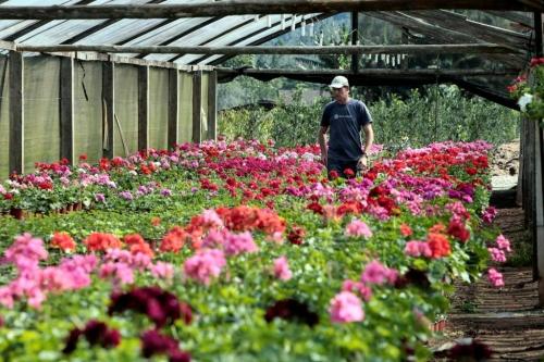 Produção de flores é foco de pesquisa em Minas Gerais