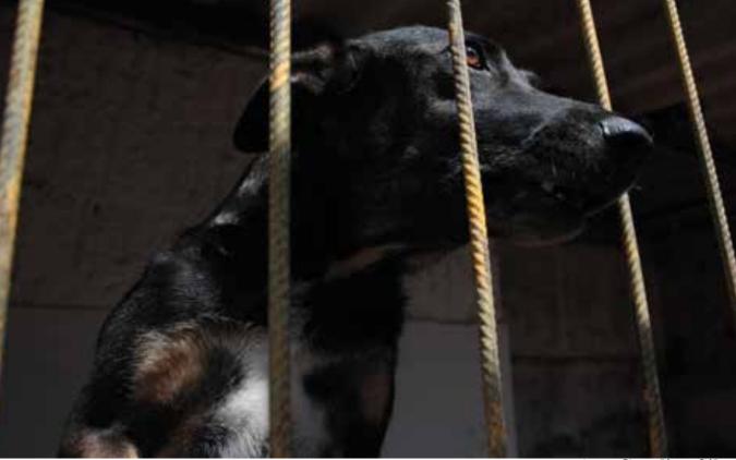 Sociedade São Francisco de Assis desenvolve trabalho de resgate de animais abandonados